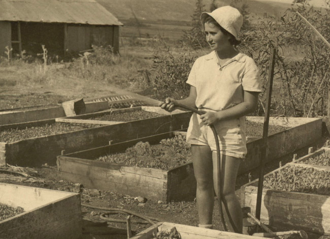 Aza at work in the vegetable garden, 1940s.